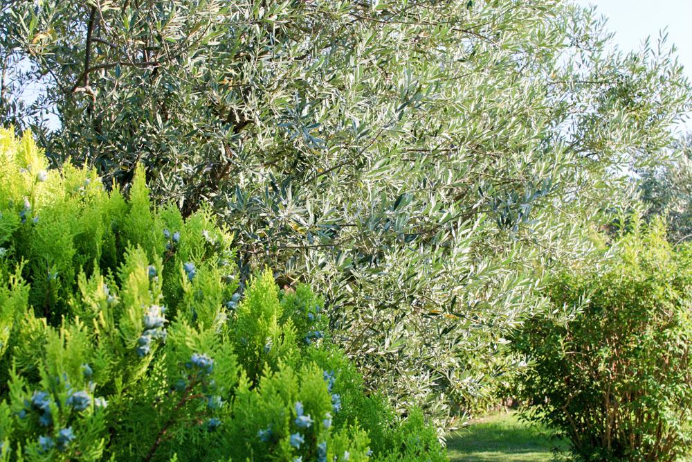 Pr sentation de votre sp cialiste pour l 39 entretien de for Jardinier paysagiste herault