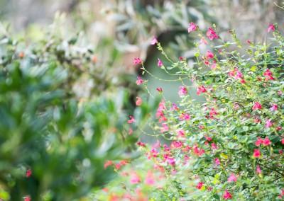 Une nature et un jardin en parfaite santé