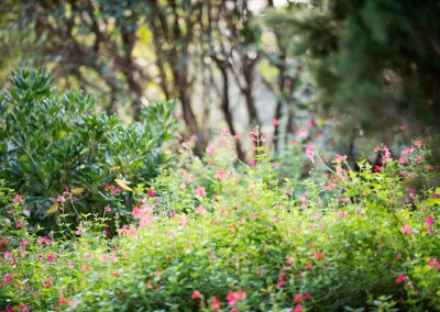 Des jardiniers professionnels à votre service sur le Gard et l'Hérault