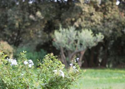 Des professionnels du jardinage à votre service sur le Gard et l'Hérault