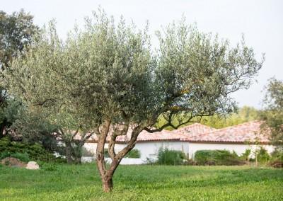 Entretien de vos jardins et espaces verts