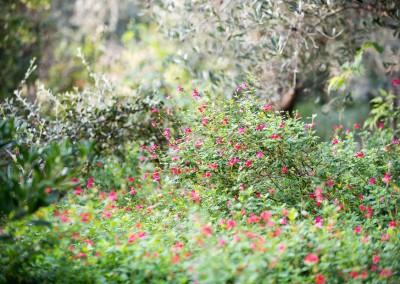Avec Avond & Jardins, vos espaces verts sont entre de bonnes mains