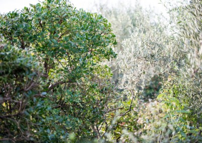 Avond & Jardins - Le spécialiste pour tous vos espaces verts sur le Gard et l'Hérault