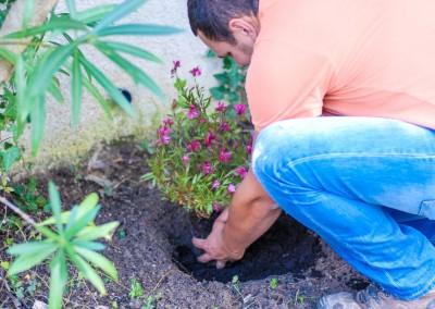 Fourniture et plantation de fleurs, plantes, arbres et arbustes sur le Gard et l'Hérault