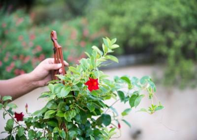 Fourniture et plantation de fleurs, plantes, arbres et arbustes