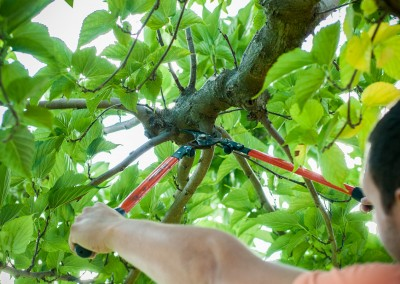 Tailles, élagage et coupe de vos arbres et arbustes sur le Gard et l'Hérault