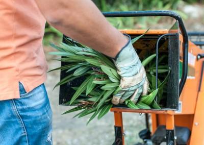 Broyage de vos branchages et évacuation des déchets verts assurés par nos soins