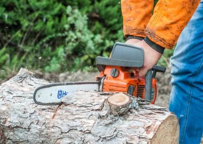 Taille, élagage et coupe de vos arbres et arbustes sur le Gard et l'Hérault
