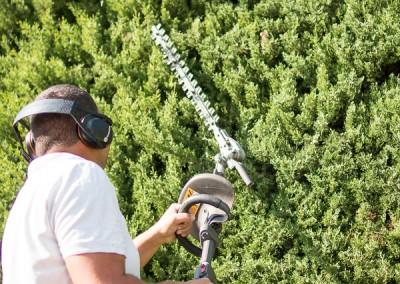 Déléguez la taille de vos haies, massifs et arbustes à des jardiniers professionnels
