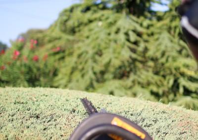 Le spécialiste de l'entretien de votre jardin et de tous vos espaces verts