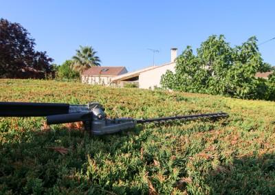 Confiez la taille de vos haies, massifs et arbustes à des jardiniers professionnels
