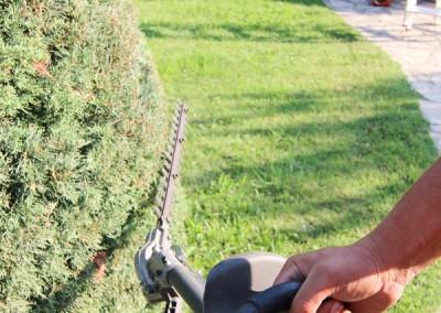 Une taille de vos haies, soignée et appliquée, effectuée par des professionnels au service de votre jardin