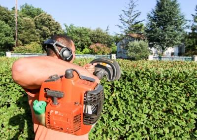 Sur Sommières, le Gard et l'Hérault, une société à votre service pour la taille de vos haies, massifs et arbustes