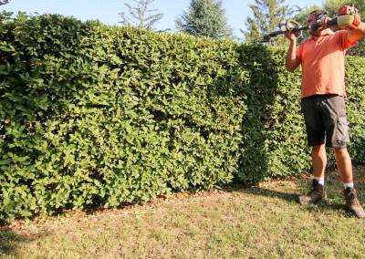 Des paysagistes et jardiniers professionnels pour la taille de vos haies, massifs et arbustes