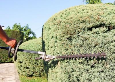 Taille de toutes vos haies, massifs et arbustes sur Sommières, le Gard et l'Hérault