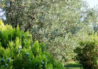 Avond & Jardins, le spécialiste de l'entretien de votre jardin et de tous vos espaces verts sur le Gard et l'Hérault