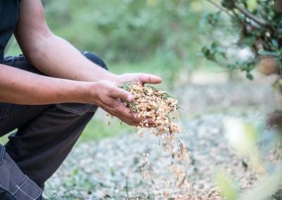 Broyage de vos branches et branchages