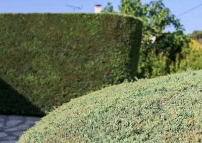 Un travail appliqué pour la taille et l'entretien de toutes vos haies, vos massifs et vos arbustes sur le Gard et l'Hérault
