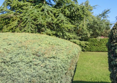 Tout notre attention portée à l'entretien de votre jardin