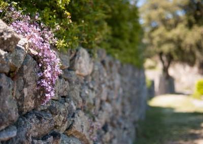 Entretien de votre jardin et de vos espaces verts sur le Gard et l'Hérault