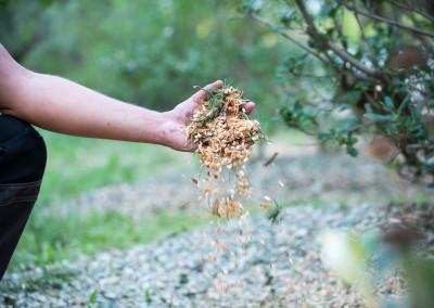 Broyage de vos branches et branchages à l'aide de nos broyeuses mécaniques