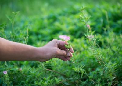 Une attention de tout instant, pour un jardin en bonne santé !