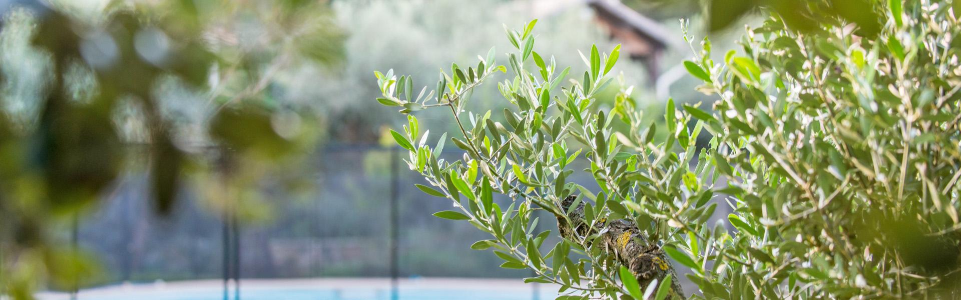Des jardiniers professionnels au service de votre jardin et de vos espaces verts sur l'Hérault et le Gard