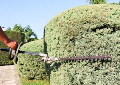 Entretien et tailles de vos haies, massifs et arbustes sur le Gard et l'Hérault