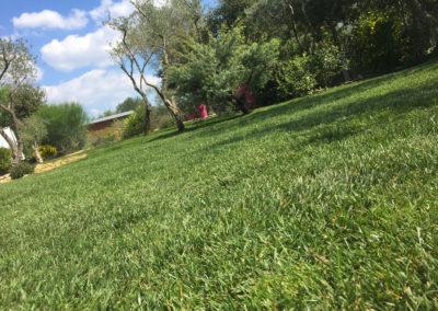 Une pelouse impeccable toute l'année !