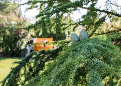 Un jardin en pleine forme avec le contrat d'entretien Avond & Jardins