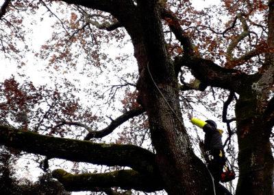 Élagage d'arbres à l'aide d'un système de cordes, le tout en pleine sécurité