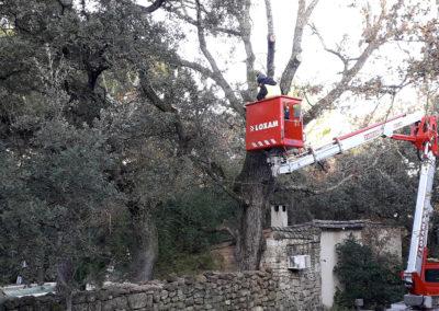 Élagage d'arbres en toute sécurité via une nacelle